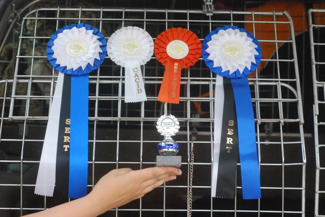 The Rosettes from the Estonian shows